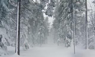 da draußen in dem winterwald lied