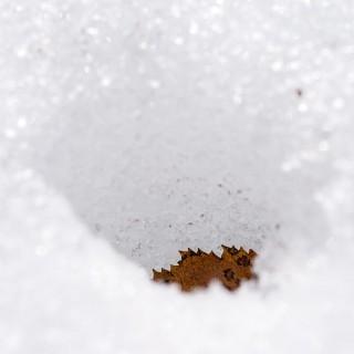Ein Birkenblatt hat sich in den Schnee geschmolzen