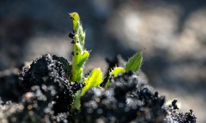 Eine Pflanze bricht durch den Asphalt