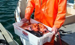 Der Fisch ist fast so orange wie das Ölzeugs des Fischers