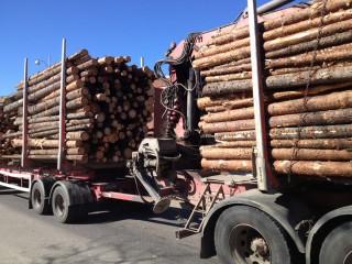 Ein Holzlaster kreuzt auf der E4