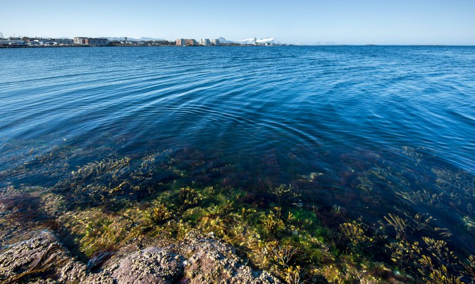Blick von der Insel Rundholmen Fels—Tang—Meer—Stadt—Berg
