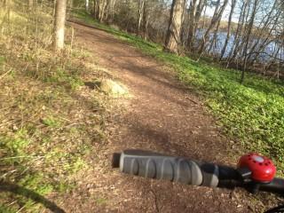 Rückfahrt auf dem Waldweg