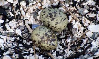 Eier am Boden