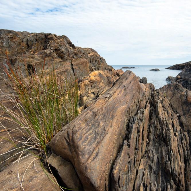 Ein Grasbüschel wächst auf den schroffen Felsen –mein Lieblingsbild von heute