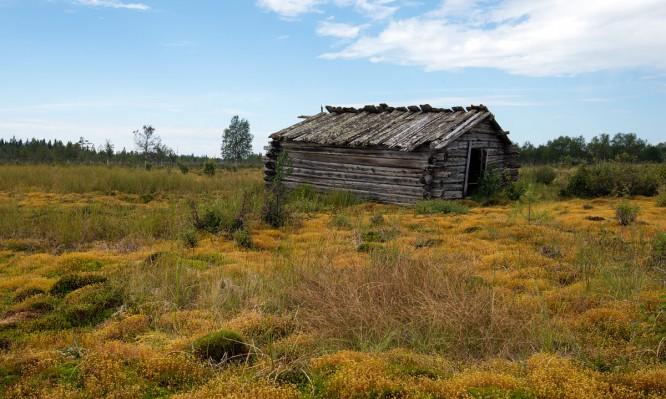 Hütte im Moos