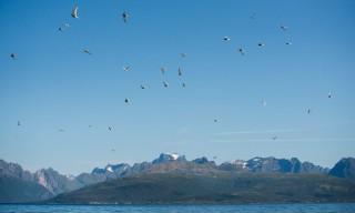 Seeschwalbenschwarm