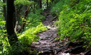 Weg durch den Hangwald