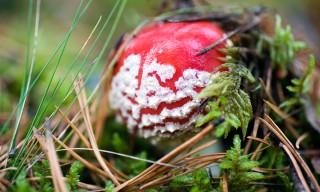 Im Wald ist Pilzsaison. Leider keine Pfifferlinge