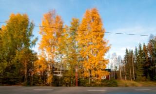 Rückweg: Gelbes Herbstlaub prägt die Straßenränder