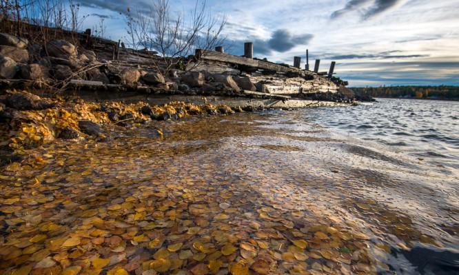 Schwimmendes Laub auf dem Skellefteälven