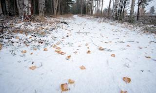Der Waldweg an der Ecke