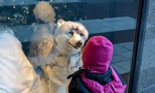 Ein Kind verguckt sich in einen großen Stoffhusky