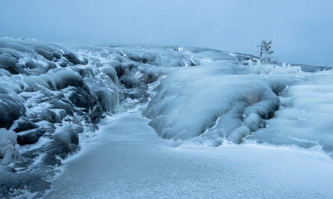 Einsame Kiefer auf Eis und Fels