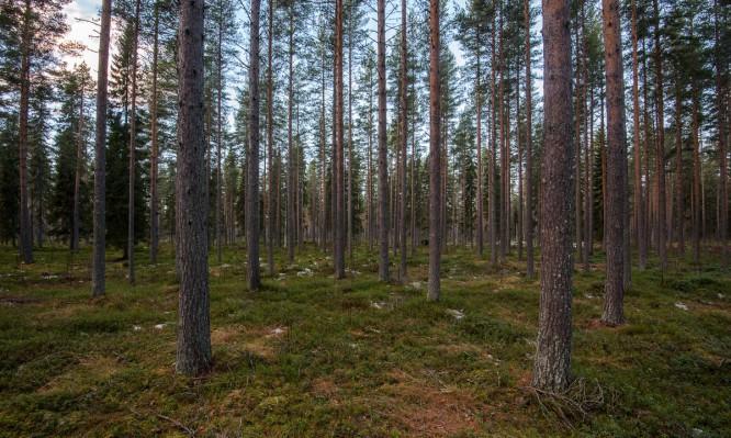 Schneeloser Wald westlich von Klutmark