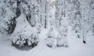 Mitten im verschneiten Wald