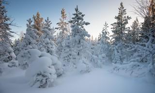 Schneebepackter Winterwald