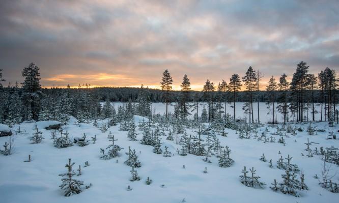 Winterlandschaft bei Norrlångträsk