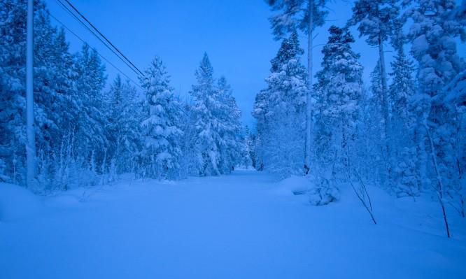 Ein Weg durch den Winterwald