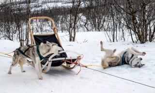 Hunde in Aktion: Kauen und sich im Schnee wälzen ist toll!