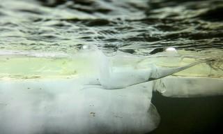 Eis unter Wasser