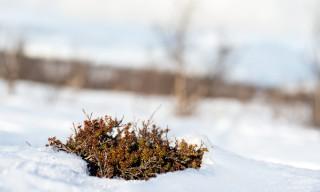 Wenig Schnee auf den freien Flächen