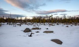Altschneefeld auf einer Lichtung
