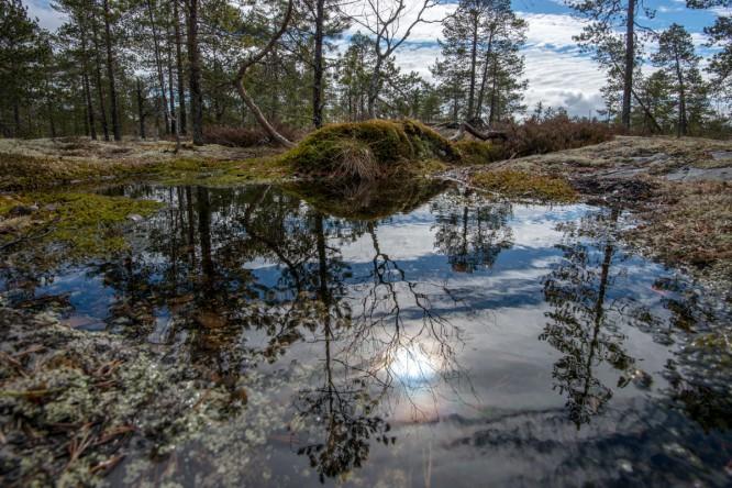 Wasserlache auf dem Granitfels