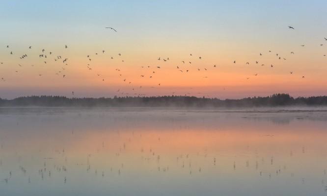 Aufgescheuchte Vögel –schade, ich tue Euch doch nichts
