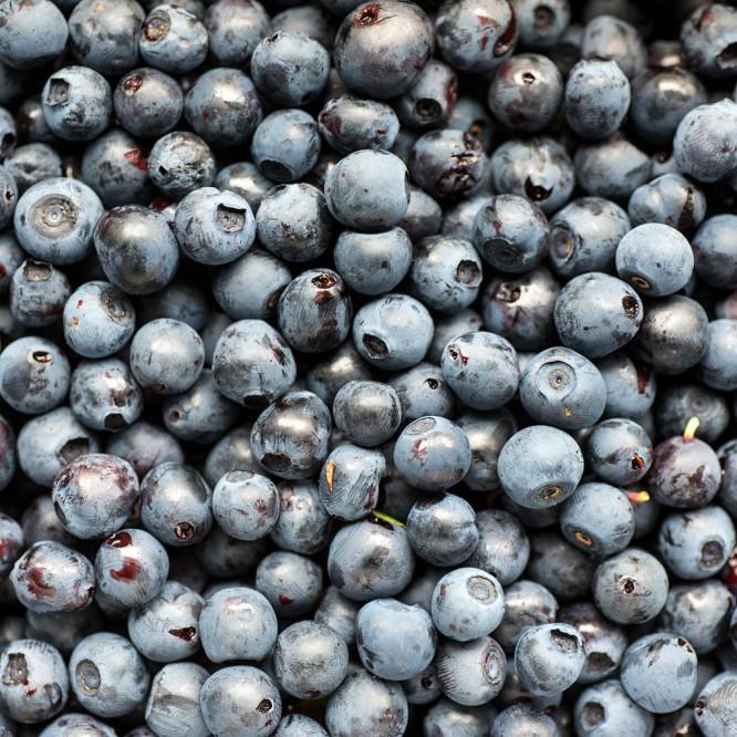 Blåbär –Heidelbeeren