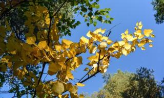 Die ersten Herbstfarben