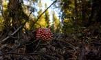 Im Wald von Norrskär